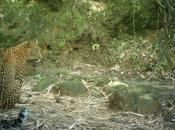 Leopardscape: Leopard's View Landscape
