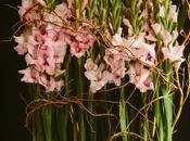 Gladiola Hedge