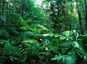 Facts Tropical RainForest