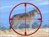 Killing Wolves: Hunter-Led Against Science Willdife
