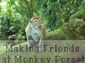 Making Friends Monkey Forest Ubud
