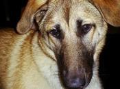 Extraordinary Pet: Nyla