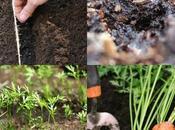 Growing Happy Carrots