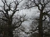 Woburn Abbey Gardens Through Seasons