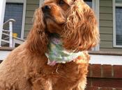 Extraordinary Pet: Sandy