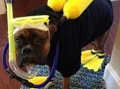 World's Funniest Images Animals Scuba Diving Gear