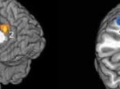 Training Emotions Brief Video from Brain Club
