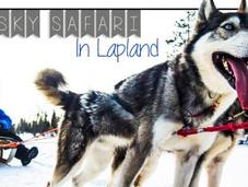 VIDEO: Husky Safari Lapland