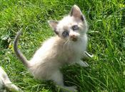 Lazy Kitties Spring