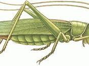 Patience Grasshopper Ann!