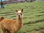 Lares Trek Peru: Loving