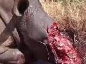 Stop Rhino Poaching South Africa