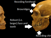 Neanderthals Were Just Really People: Disproven