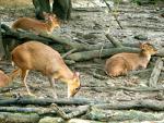 Watching Wildlife November