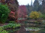 Harold Hillier Gardens Plants Current Interest