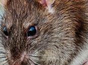 Helpful Gardener: Rats Pollination Seed Dispersal