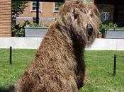 Making World Smile Mali Sheepdog, Montreal Botanical Garden