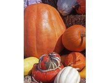 Gratitude: Healthy Thanksgiving Recipe