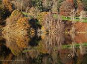 Landscape Photo Autumnal Perthshire Trees