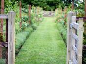 Kitchen Garden Review