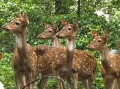 Thenmala Deer Rehabilitation Centre, Prime Attractions Place