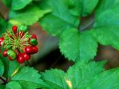 Offenders Jail Time Ginseng Poaching Great Smoky Mountains National Park