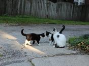 Kitty Miracle