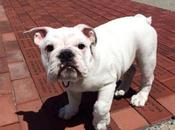 Meet Marines' Newest Mascot: Wiggly, Wrinkly Pvt. Smedley Butler