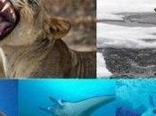 Global Protection Proposed Sharks, Rays, Sawfish, Polar Bears Lions UNEP