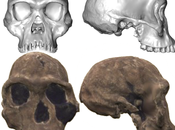 "Complete Homo Habilis Skull ""discovered"""
