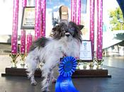 Ugliest 2014 Winner Brings Awareness Animal Rescue