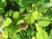 Praise Brown Butterflies