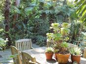 Morning Glory Garden Sean Hogan