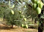 Interview with Olive Expert
