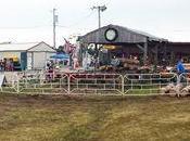 Anoka County Fair Hopping