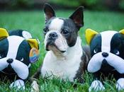 Wugadogs Toys Modeled After Real Life Dogs