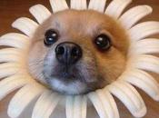 Dogs Dressed Flowers