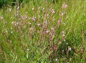 Colorado Butterfly Plant Force