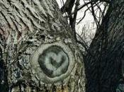 Love Like Flannel