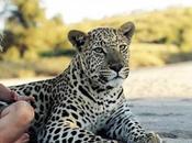 Incredible Story Tippi Degré, Real Life Mowgli