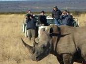 Wearable Technology Helping Save Rhinos from Poachers