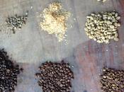 Taste Bolivian Coffee Wine