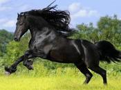 """Creation: Majestic Friesian """"war Horse"""""""